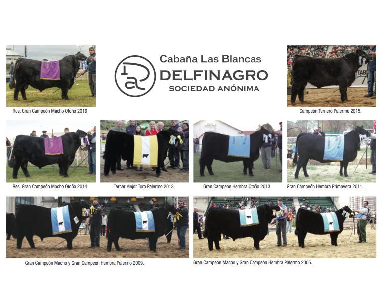 campeones Delfinagro